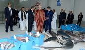 SM El Rey inaugura la nueva lonja de pescado de Dajla