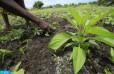 OCP África y el BAD movilizan 4 millones USD para el acceso a fertilizantes en Costa de Marfil y Gha