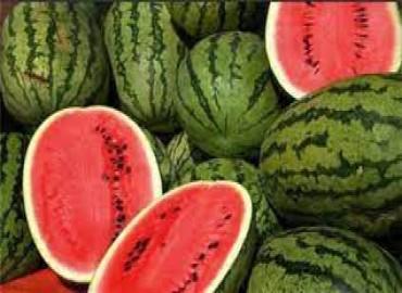 ONSSA: la pastèque marocaine ne contient pas de contaminants