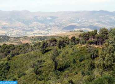 Forests of Morocco 2020-2030: Programming of 600,000 ha of Forest Plantations by 2030