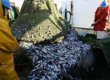 España espera que el PE ratifique el acuerdo de pesca con Marruecos en diciembre